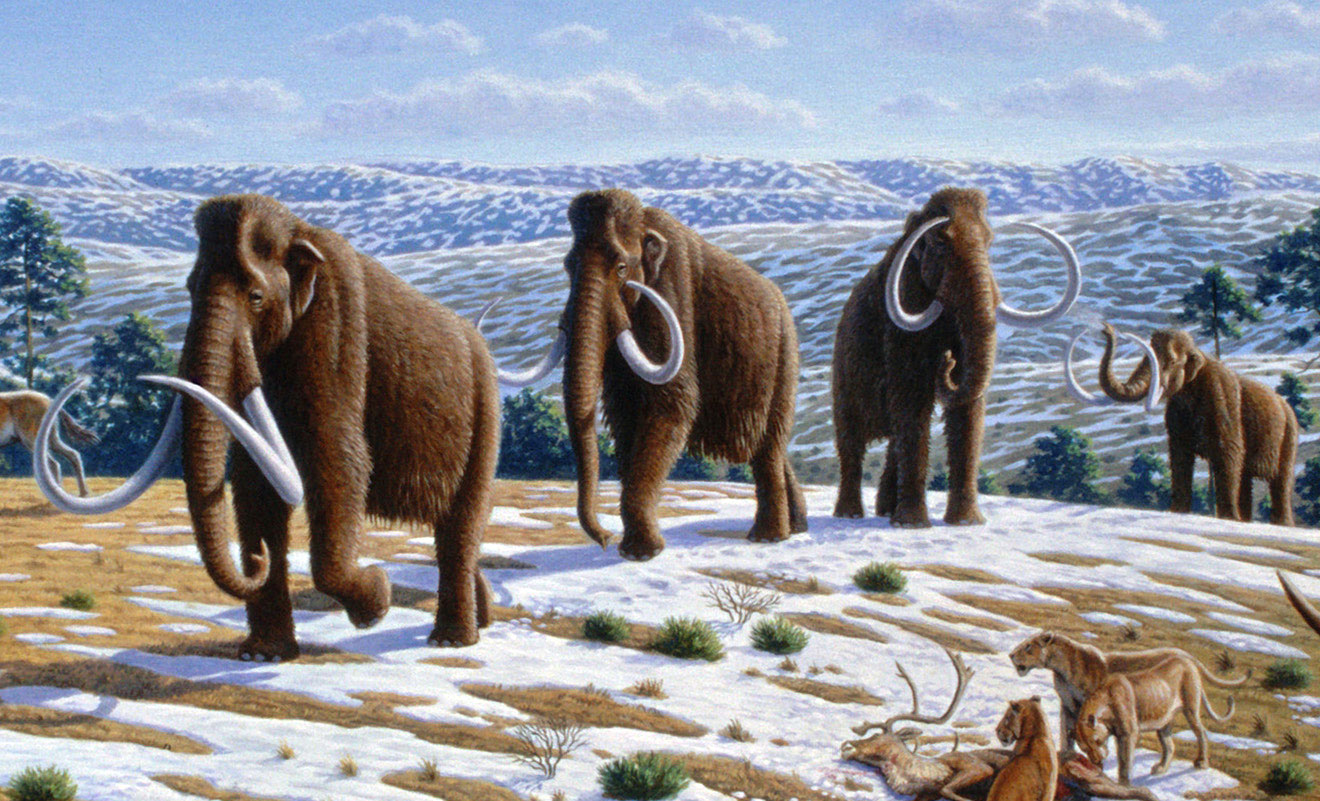Mammoths on the Mammoth River